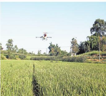 仁义镇 无人机喷洒农药2000亩