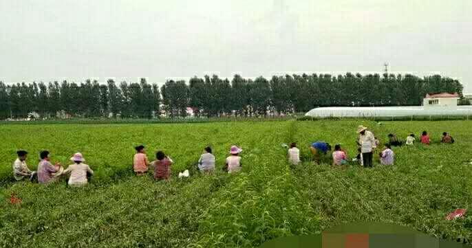 """遂平阳丰镇开辟""""就业基地 技术培训""""扶贫新路"""