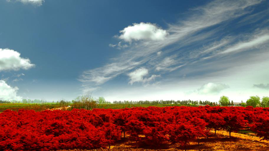 安徽省著名绿色生态4A级旅游景区:官亭林海景区