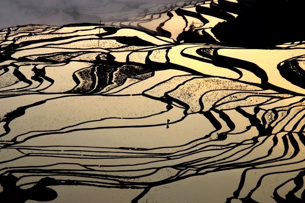 """【中信银行?滇鹰计划】云南元阳""""梯田旁的领读""""公益实践招募"""