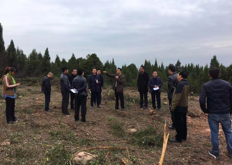 如何做好新常态下林业工作?