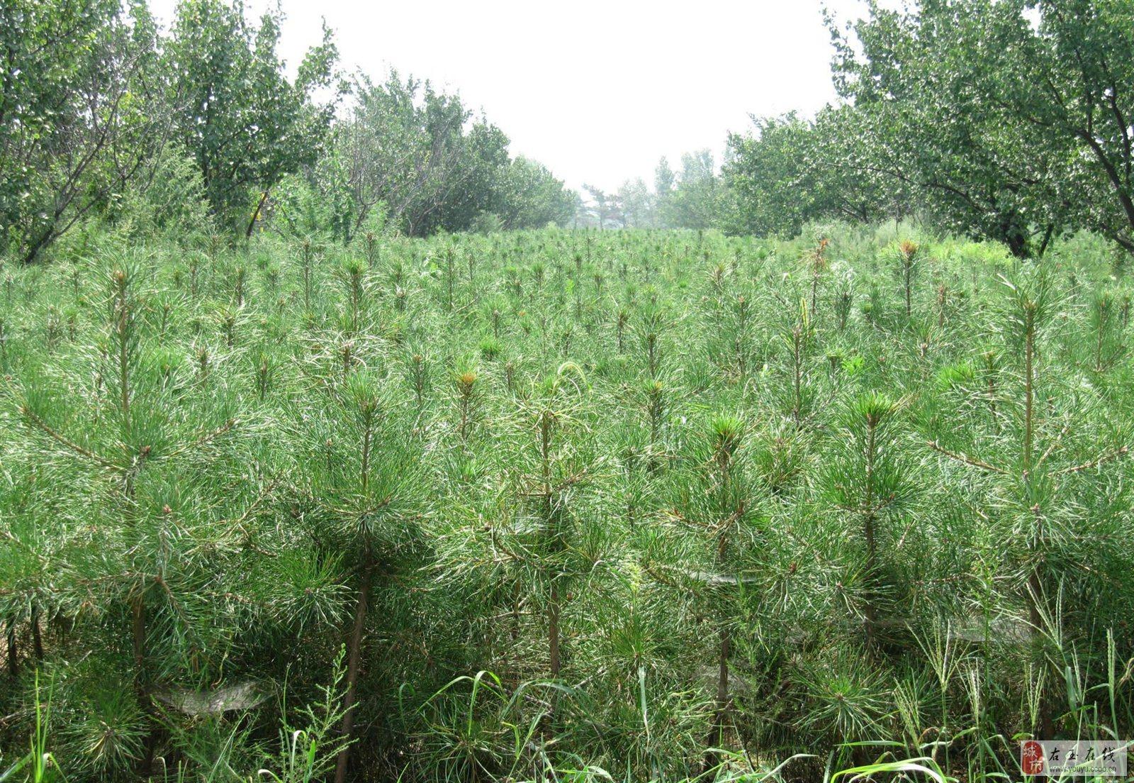 壁纸 成片种植 风景 植物 种植基地 桌面 1600_1104