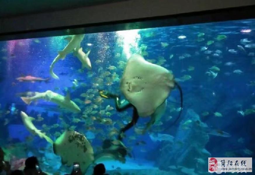 壁纸 海底 海底世界 海洋馆 水族馆 873_600