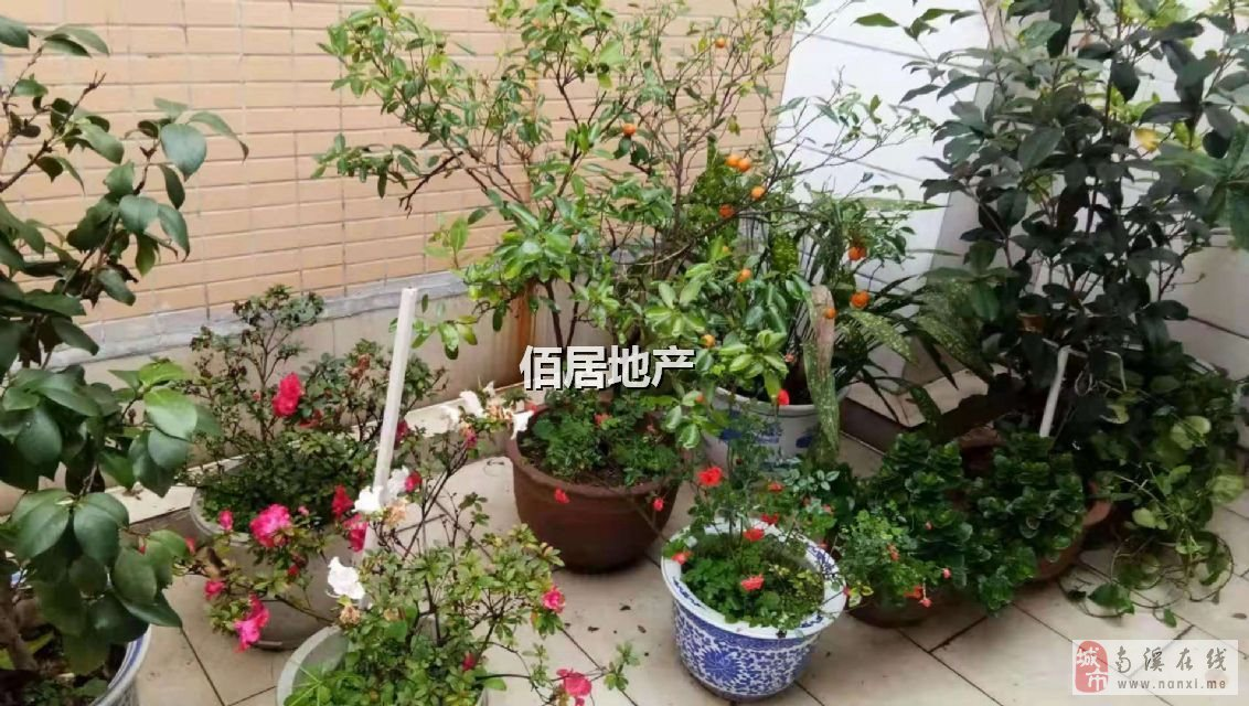 红光佳苑(福临大道)3室2厅2卫74万元