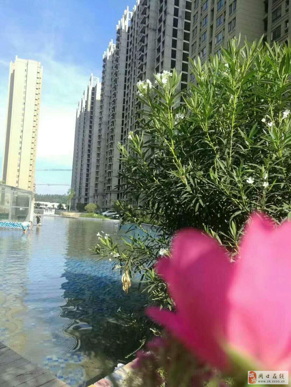 低价出金水湖花园电梯现房,现房,现房,有限