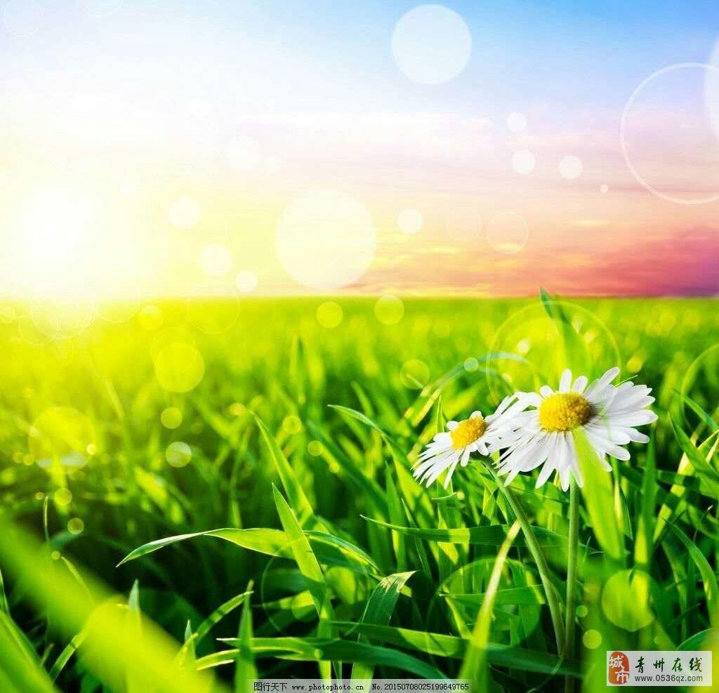 微信头像风景或花草海