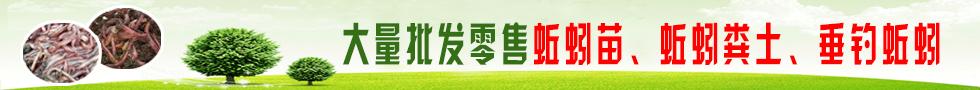 大量批发零售蚯蚓苗、蚯蚓粪土、垂钓蚯蚓