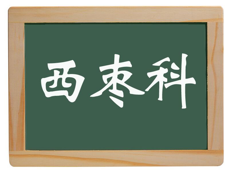 唐园镇西枣科村