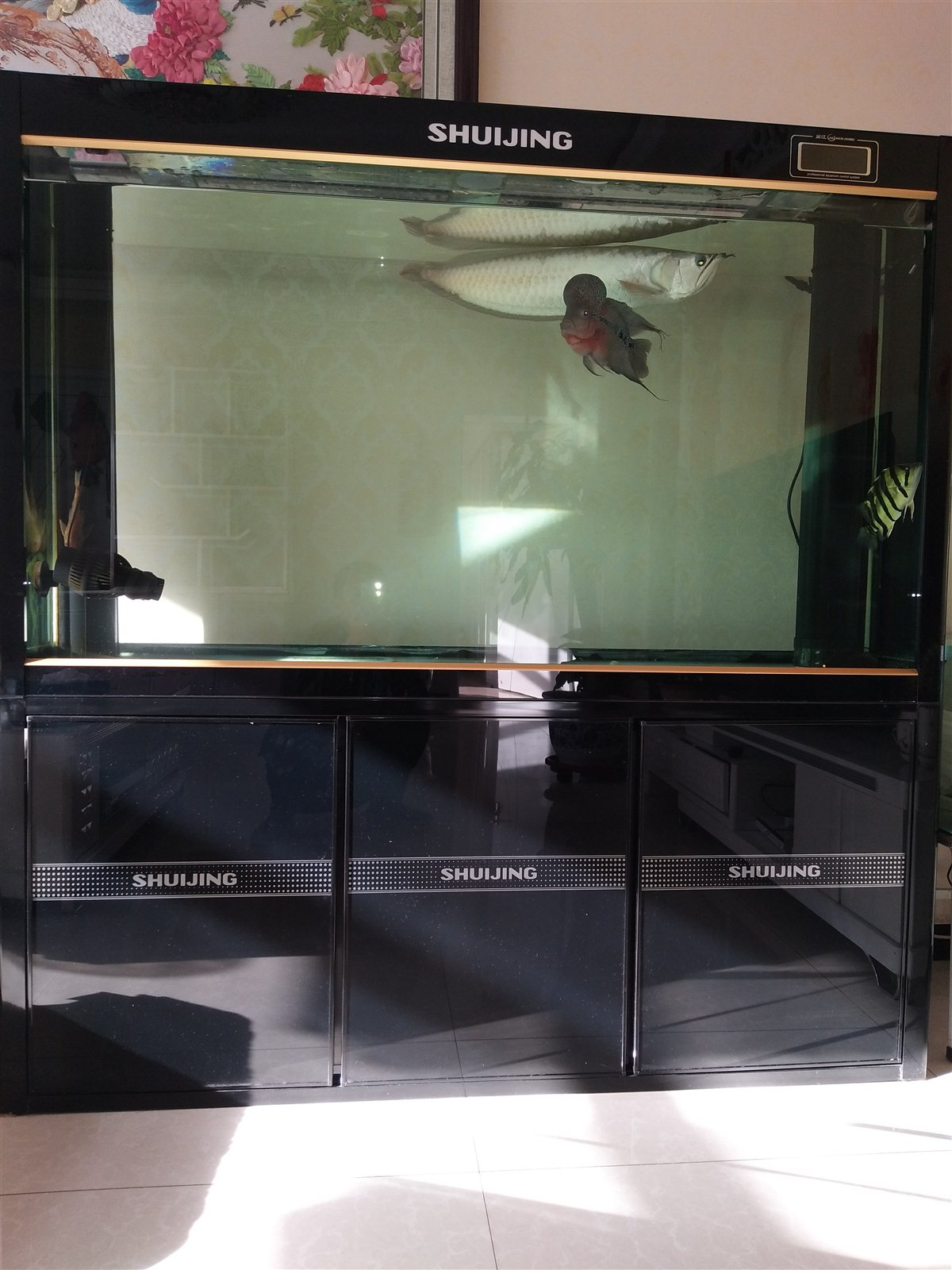 个人鱼缸出售