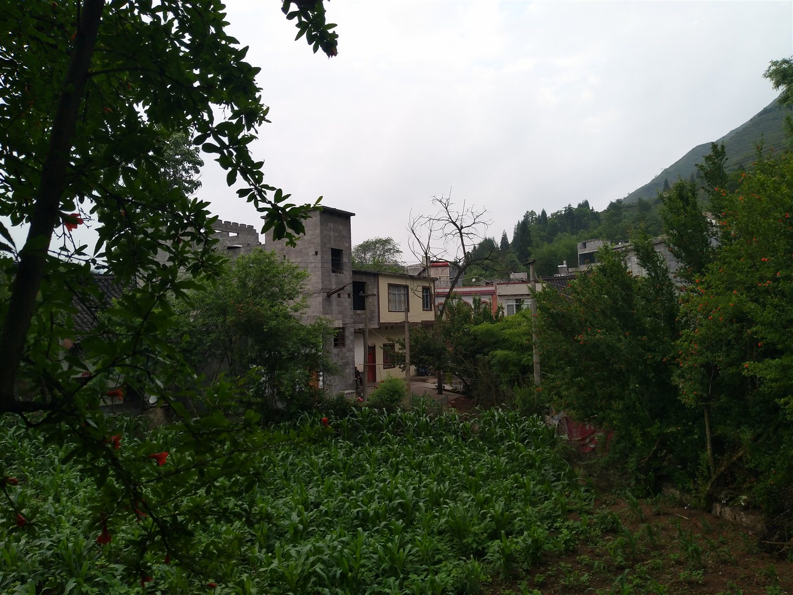 乌蒙山村之歌