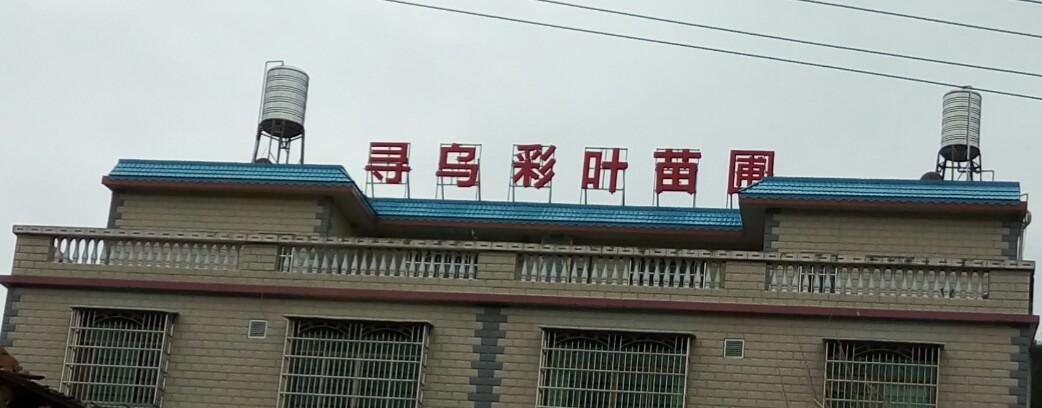 寻乌县彩叶苗圃