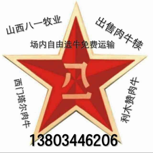 A山西肉牛13803446206(贺文庭)