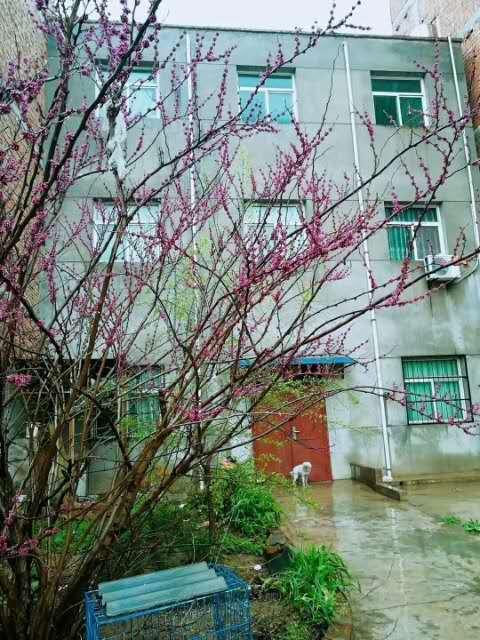 个人独院低价售蓝田西寨小区8室 3厅 3卫83万元