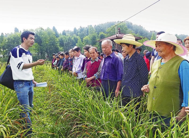 汉中南郑区濂水镇扶贫产业近千亩黄花菜丰收在望