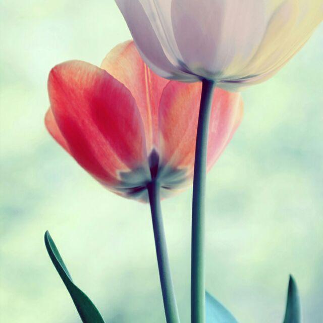 面朝大海春暖花开。